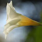 Golden Trumpet by gregAllore
