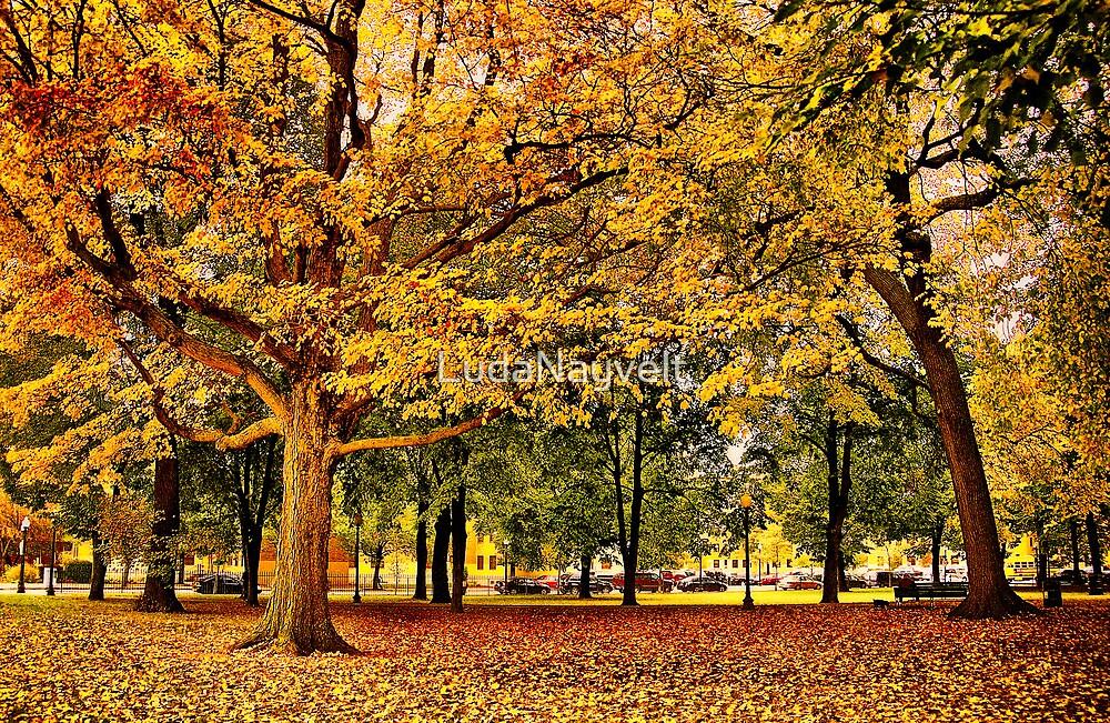 Autumn in Boston  by LudaNayvelt