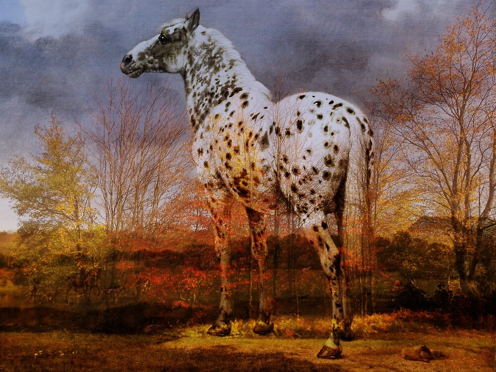 Bones of the Horse by Pamela Phelps