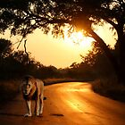 LION ON THE ROAD by RonelBroderick