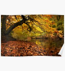 Nidd Gorge in Autumn Poster