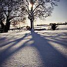 snow shadows by prawnie