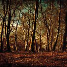 Autumn in the Forest by Anne Staub