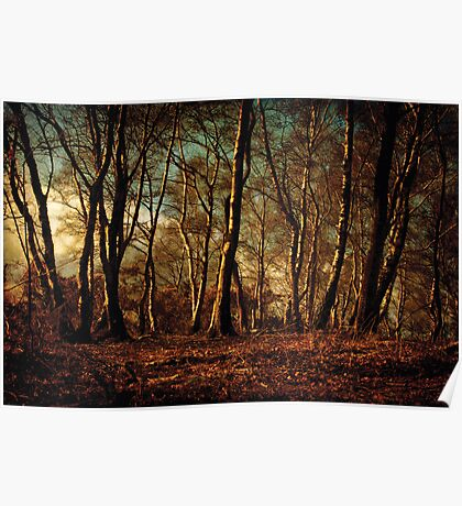 Autumn in the Forest Poster