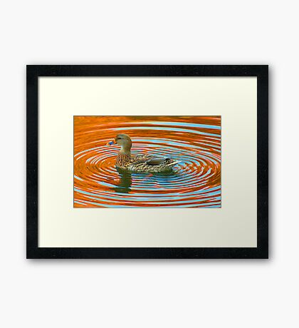 Duckcentric Framed Print