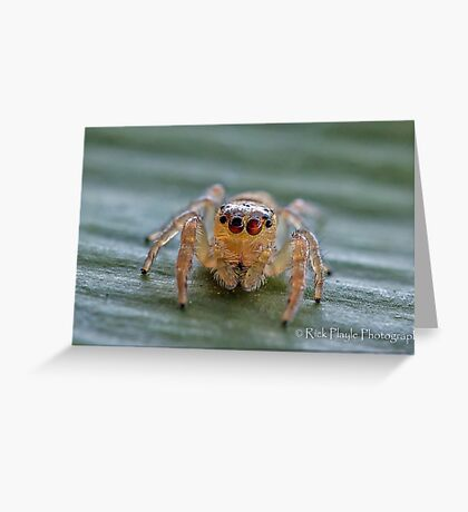 The Jumping Spider Greeting Card