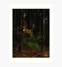 Low key foliage  Art Print