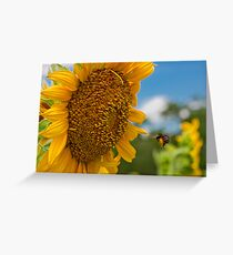 Bee & Sunflower Greeting Card