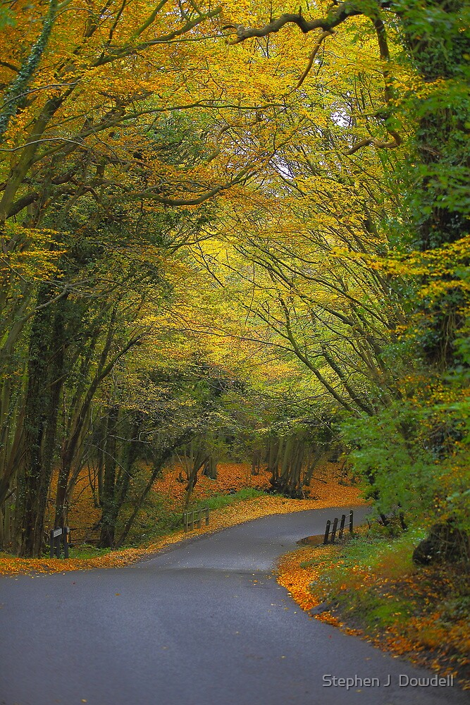 Autumn colours 2012 by Stephen J  Dowdell