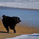 Happy Dog by Robin Black