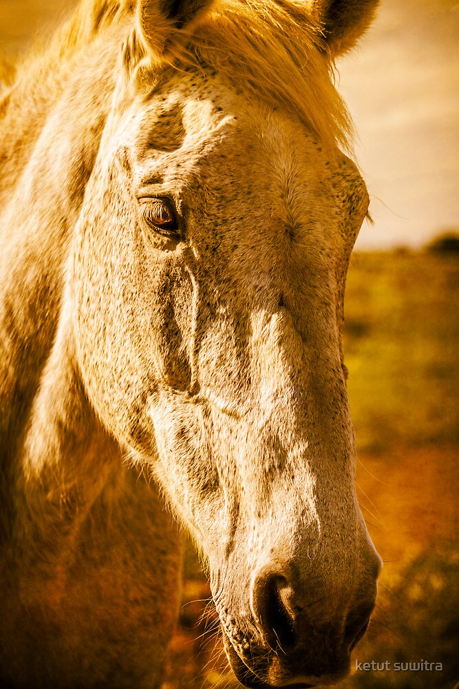 grey horse by ketut suwitra