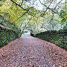 Leafy Lanes.  by Lilian Marshall