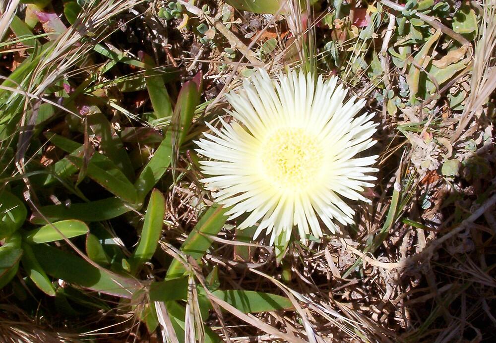 Beach Flower One - 21 10 12 by Robert Phillips