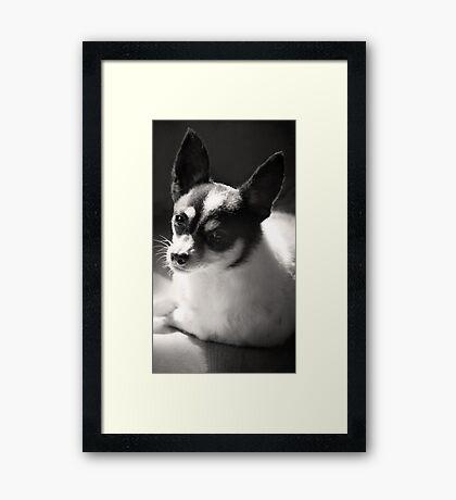 Eddie ~ Framed Print