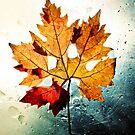 Gold Autumn by IvoVuk