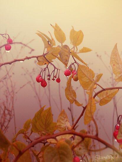 Nightshade Berries by Shawna Mac