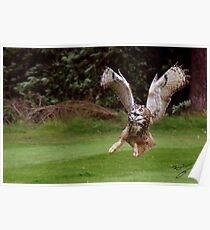 Screech Owl Poster