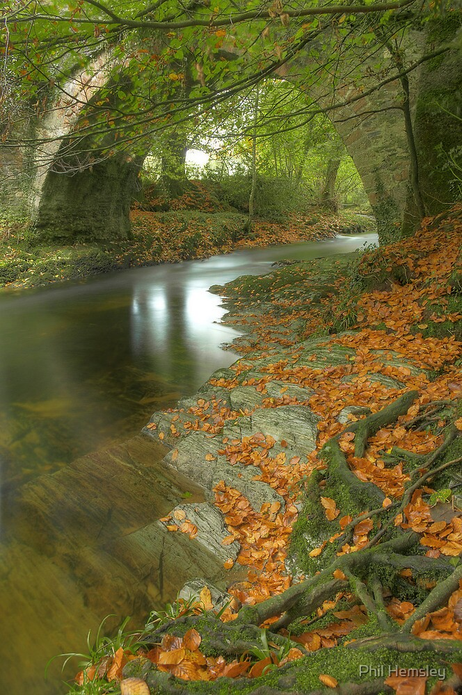 The smile of autumn by phil hemsley