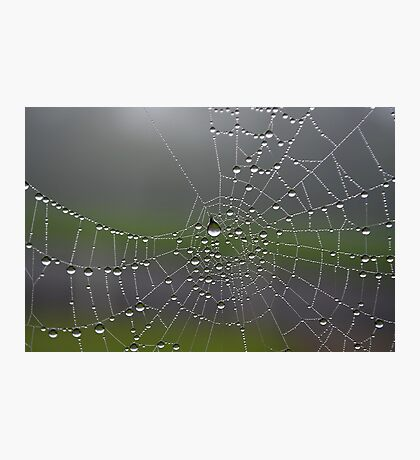 Another Web Shot Photographic Print