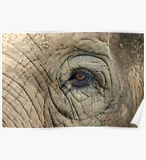 Elephant Eye Graphic Poster