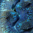 Blue Matrix by Reef Ecoimages