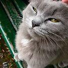 Skeptical Kitty by yuliekayy