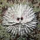 Fan Worm on Euphyllia by Reef Ecoimages