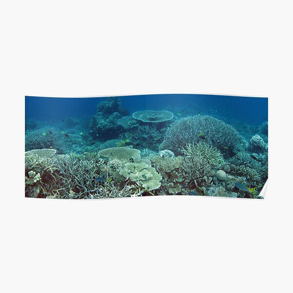 Coral Community at Pulau Wofo I Poster