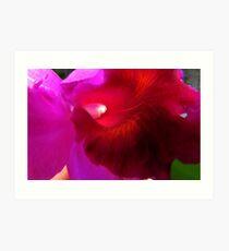 Cattleya Art Print