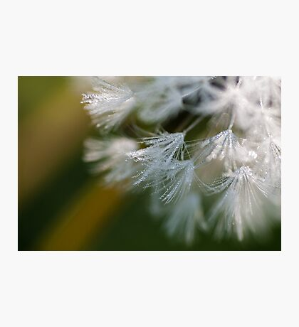 Floofiness Photographic Print