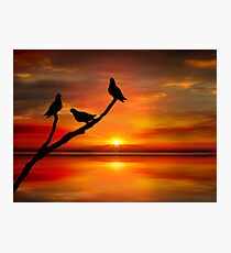 Birds at Sunset point-2 Photographic Print