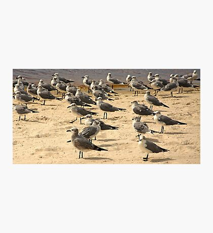 Hanging Out on Cape Coral Beach  Photographic Print