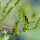 Butterfly in the Garden by Robin Black