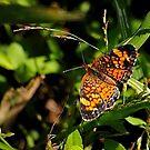 Butterfly by Robin Black