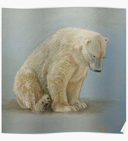 Polar bear sitting Poster