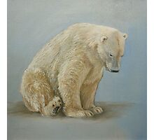 Polar bear sitting Photographic Print