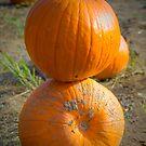 Pumpkin Stack by Euge  Sabo