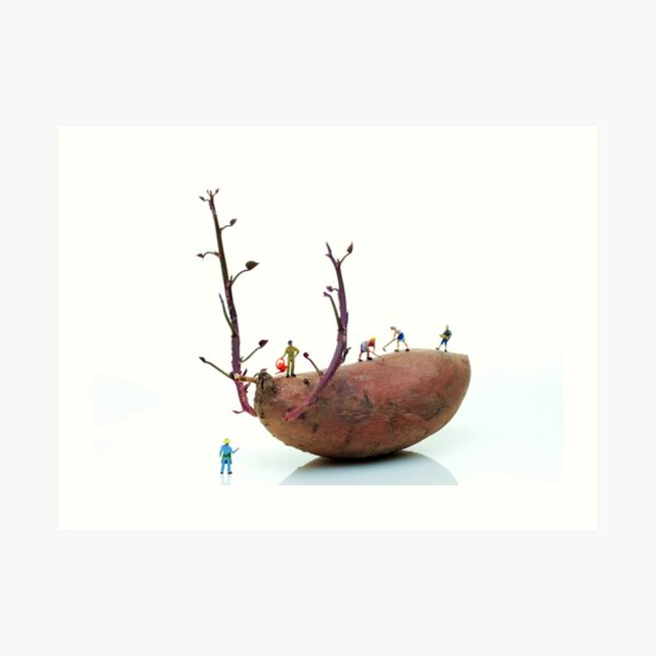Cultivation on a sweet potato Art Print