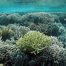 Coral Community at Pulau Wofo IV by Reef Ecoimages
