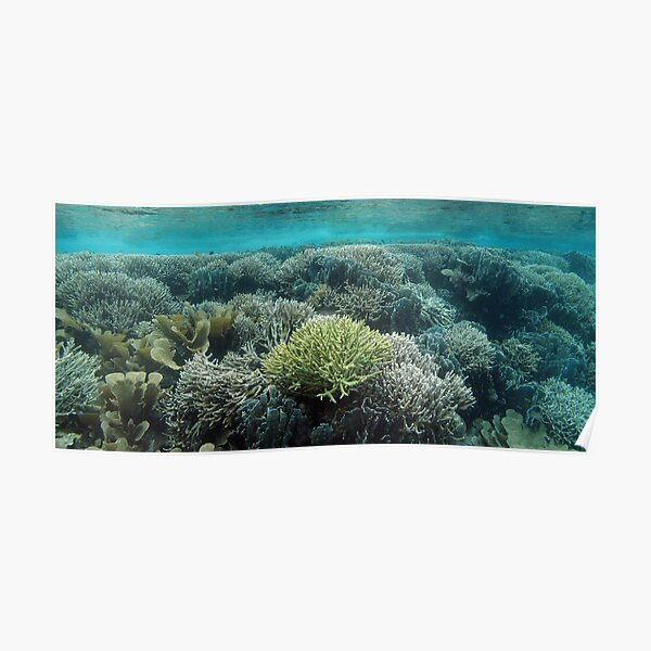 Coral Community at Pulau Wofo IV Poster