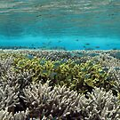 Coral Community at Pulau Wofo VI by Reef Ecoimages