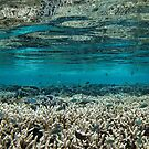 Coral Community at Pulau Wofo VII by Reef Ecoimages