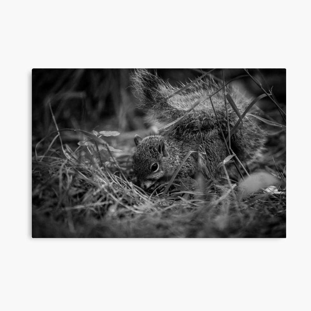 Foraging Squirrel Leinwanddruck