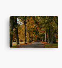 Autumn Colours in Camperdown Park Canvas Print