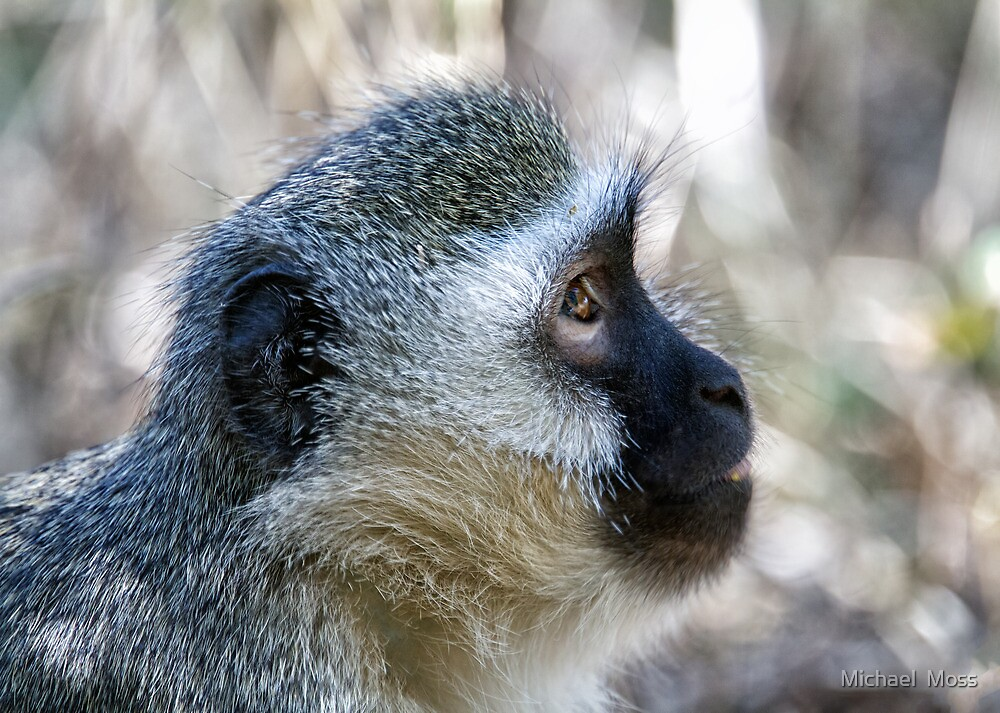 Vervet Profile by Michael  Moss