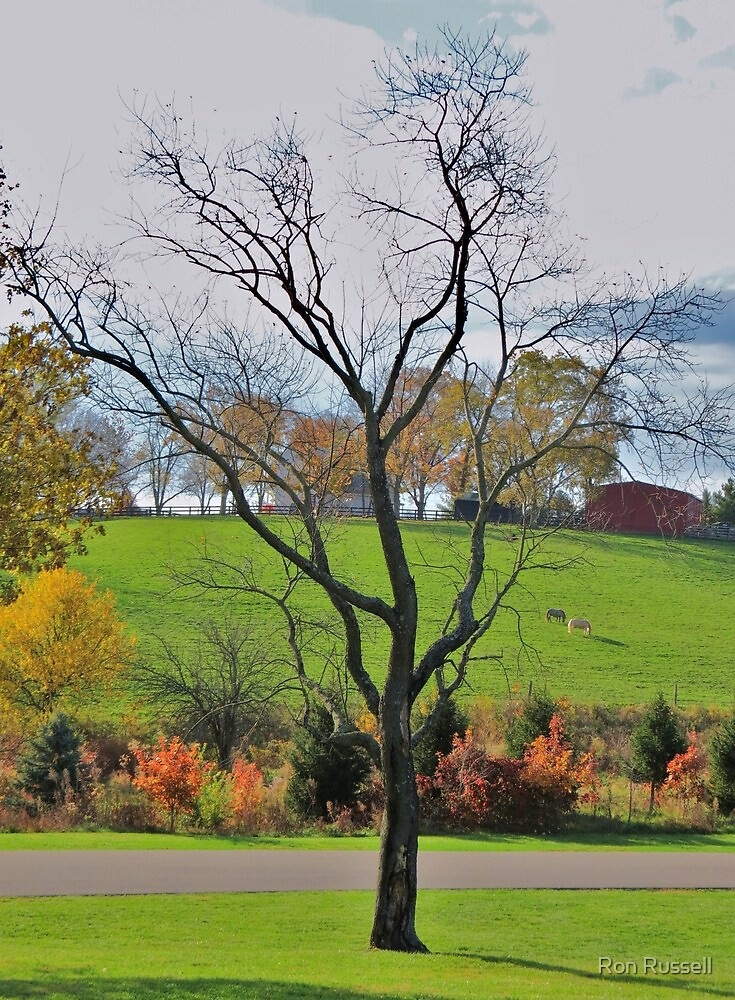 Fall on a  Kentucky Pasture by Ron Russell