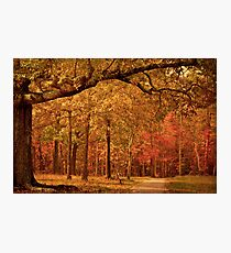 Amber Afternoon Photographic Print
