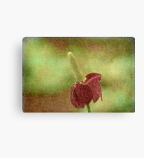 Mexican Hat Flower Canvas Print