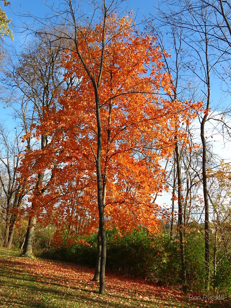 Flaming Maple by Ron Russell