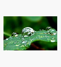 Droplets on a Leaf Photographic Print